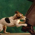 Что делать вашему ребенку, если напала собака?