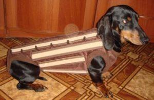 У собаки отказывают задние ноги причины