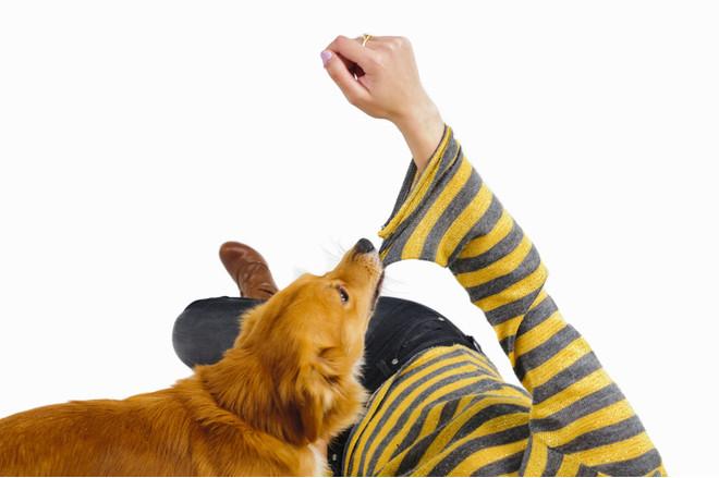Что делать, если укусила домашняя собака