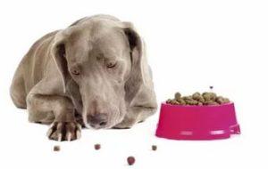 Собака плохо ест