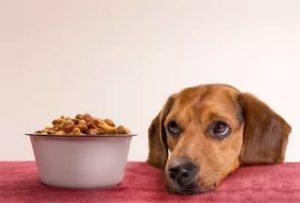 Собака плохо ест но активная