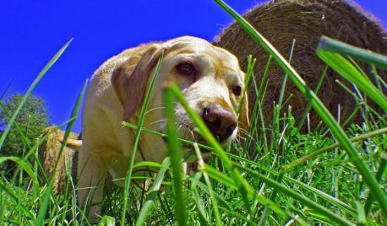 Почему собака ест траву на улице
