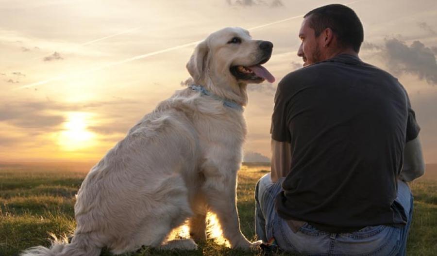 Как можно получить родословную на собаку