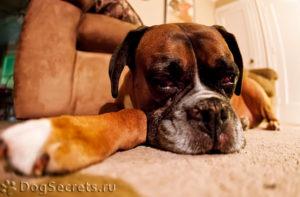 сотрясение у собаки