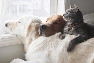 валерьянка для собак